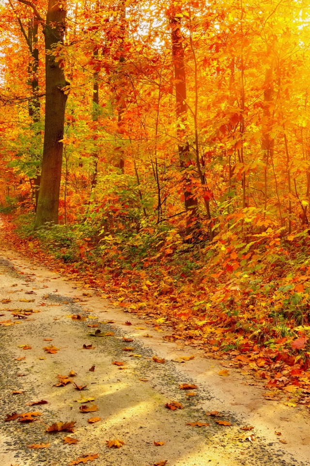 Forest Iphone Wallpaper 640x960 Autumn Forest Path Sun Beams Iphone 4 Wallpaper