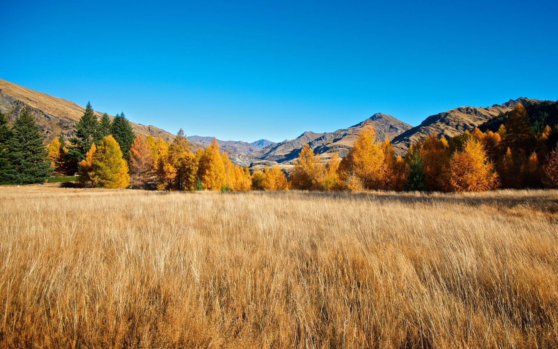 Free Fall Wallpaper Downloads Autumn Trees Field Amp Canyon Wallpapers Autumn Trees