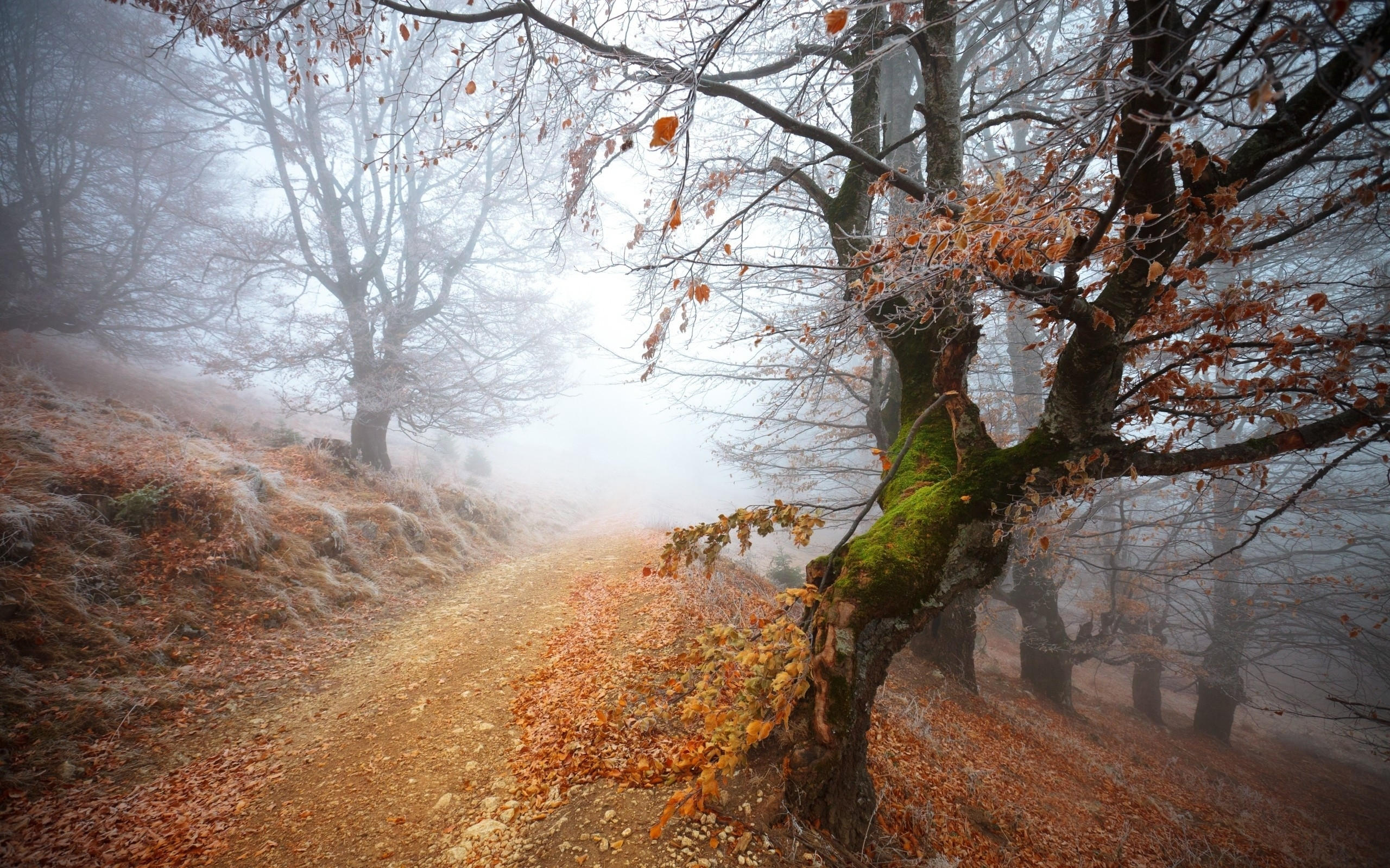 Autumn Falling Leaves Wallpaper Autumn Trees Path Amp Mist Wallpapers Autumn Trees Path