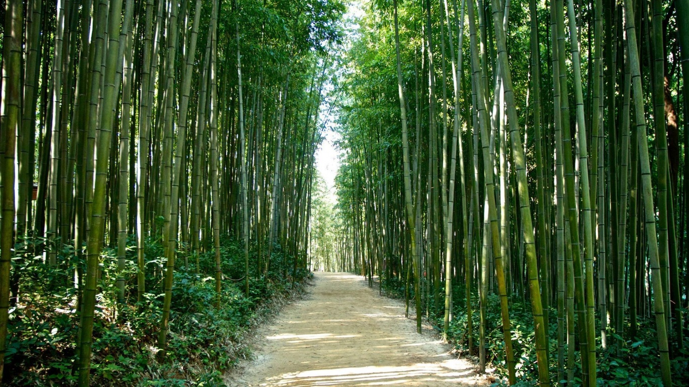 Seoul Wallpaper Iphone 1366x768 Bamboo Forest Korea Japan Desktop Pc And Mac