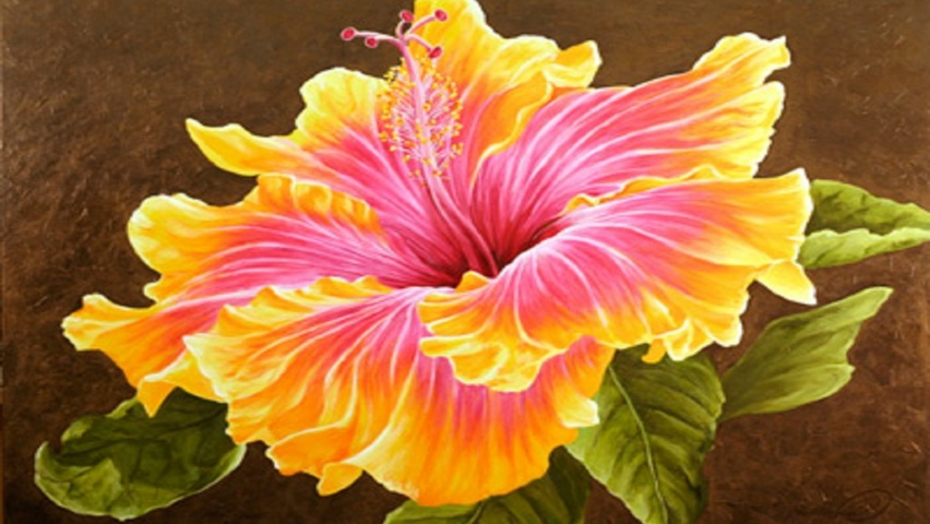 Wallpapers Hd Para Facebook 825x315 Beautiful Hibiscus Flower Facebook Cover Photo