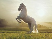 Beautiful Wallpapers White Horse Wallpapers