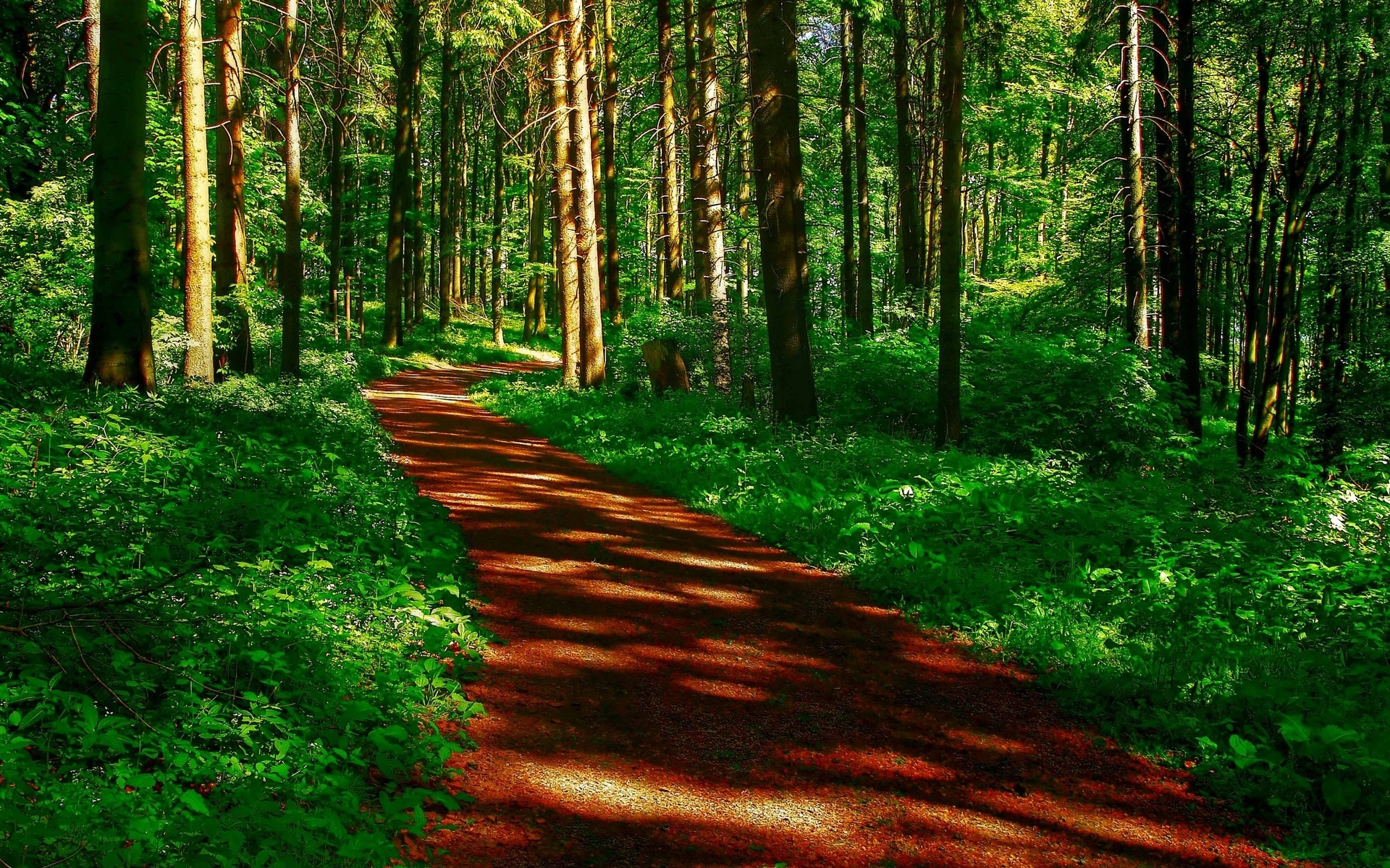 3d Animated Wallpapers For Mobile Free Download Brown Path Green Plants Wood Wallpapers Brown Path Green