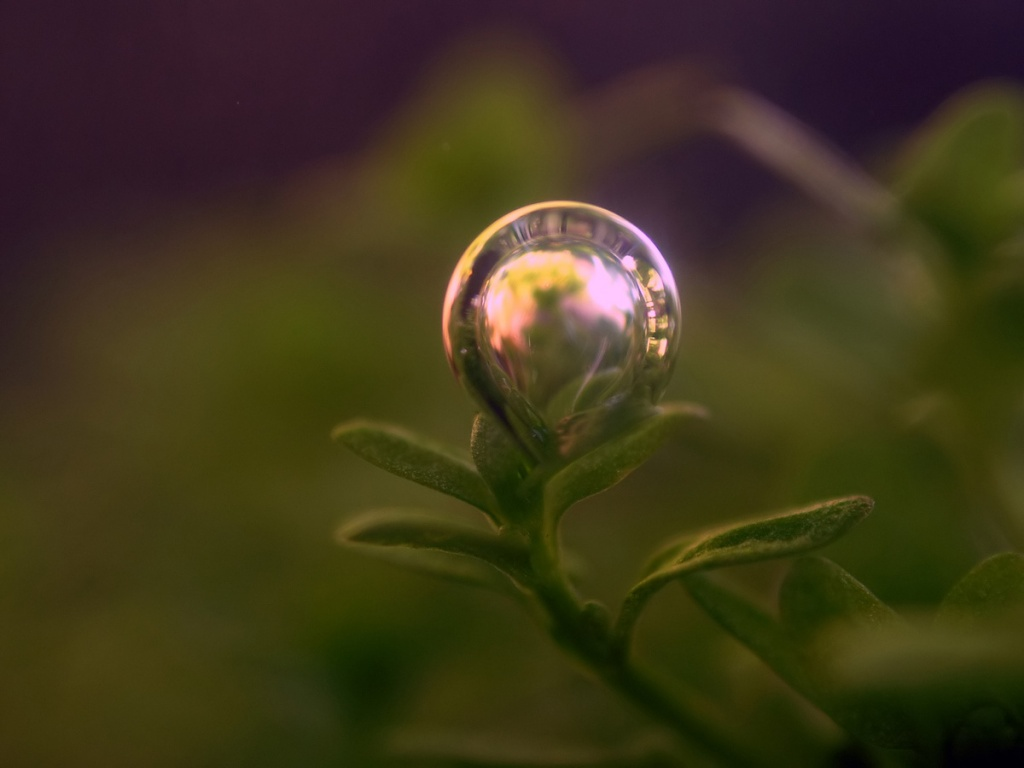 How To Set Animated Wallpaper 1024x768 Bubble On Plant Desktop Pc And Mac Wallpaper