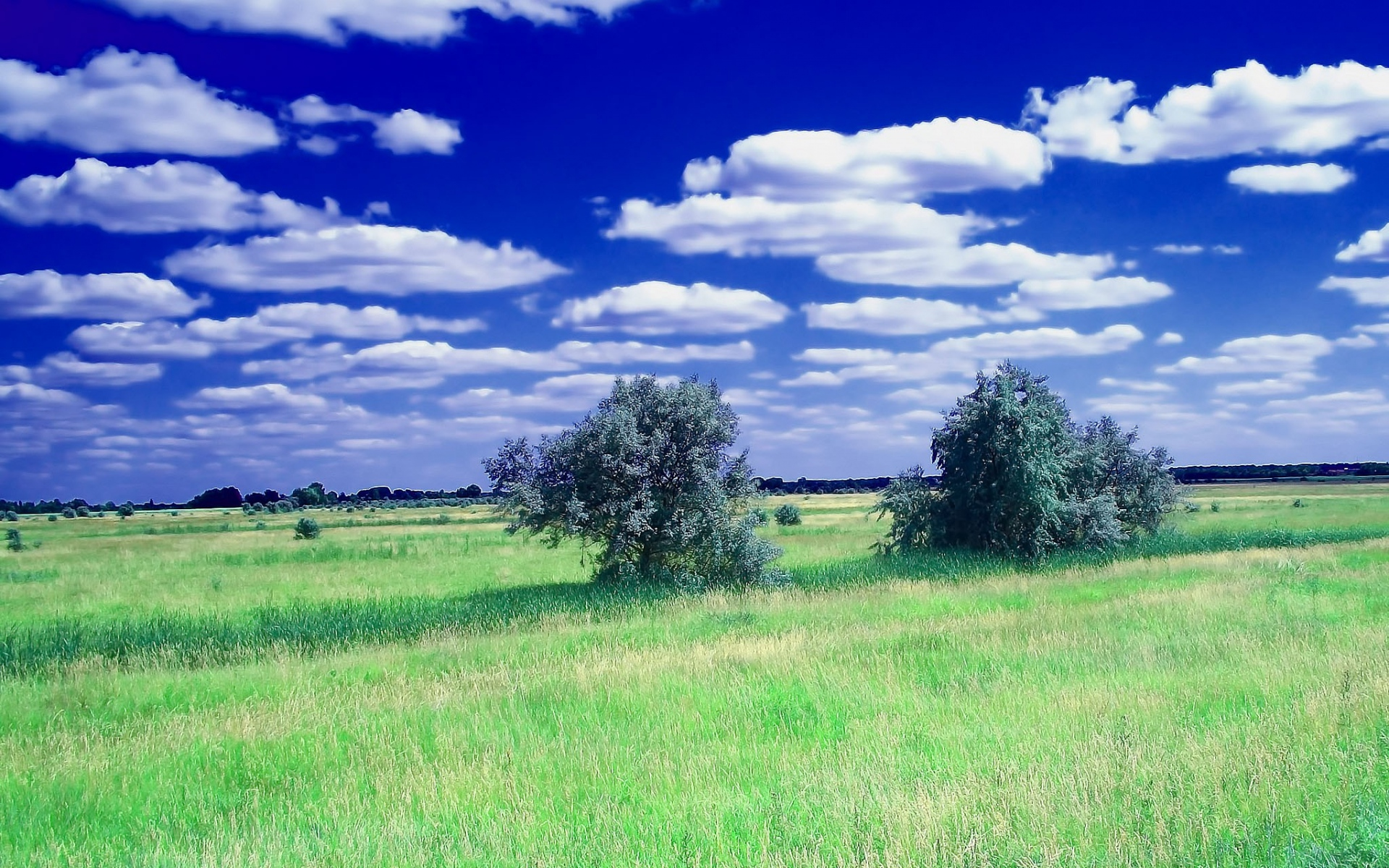 Forest Animated Wallpaper Bushes Grass Field Clouds Sky Wallpapers Bushes Grass