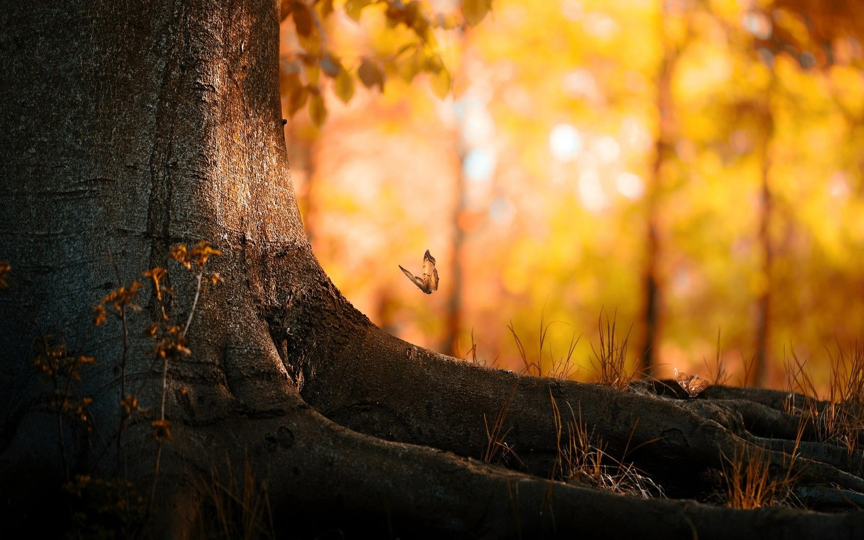 Animated Fall Wallpaper Butterfly And Tree Macro Wallpapers Butterfly And Tree