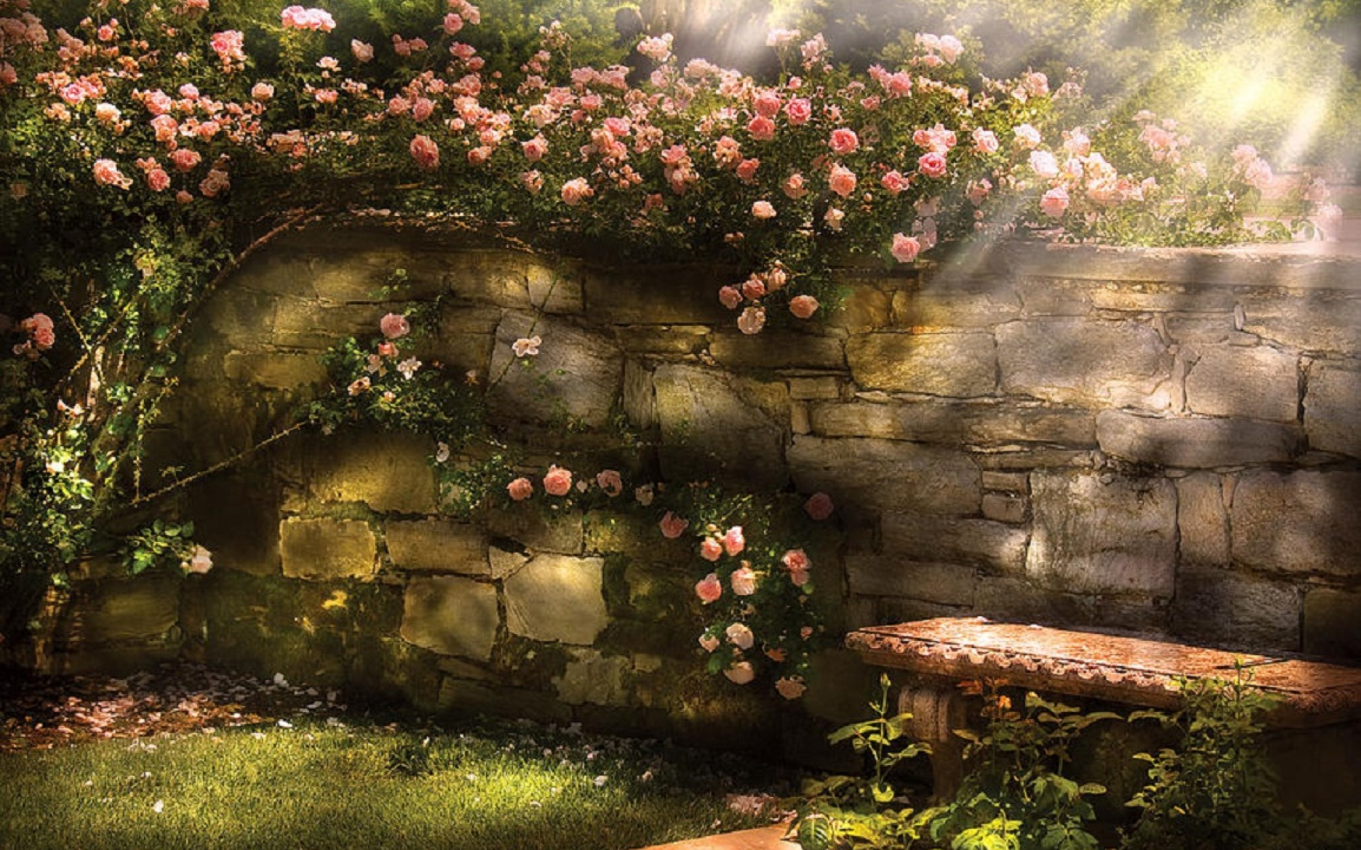 Anime Goth Girl Wallpaper Climbing Rose Wall Bench Sunny Wallpapers Climbing Rose