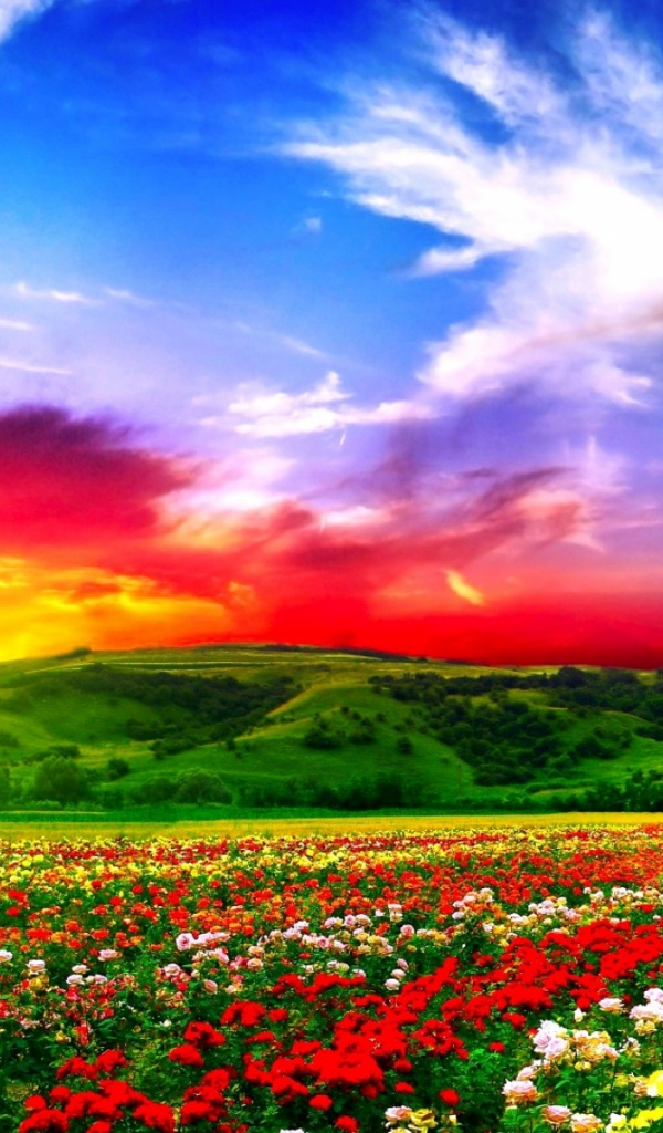 Colorful Iphone Wallpaper 600x1024 Colorful Flower Fields Galaxy Tab 2 Wallpaper