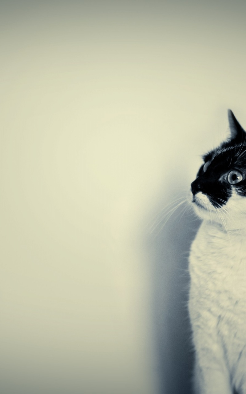 Download Cute Wallpapers For Pc 800x1280 Cute Black And White Cat Desktop Pc And Mac Wallpaper