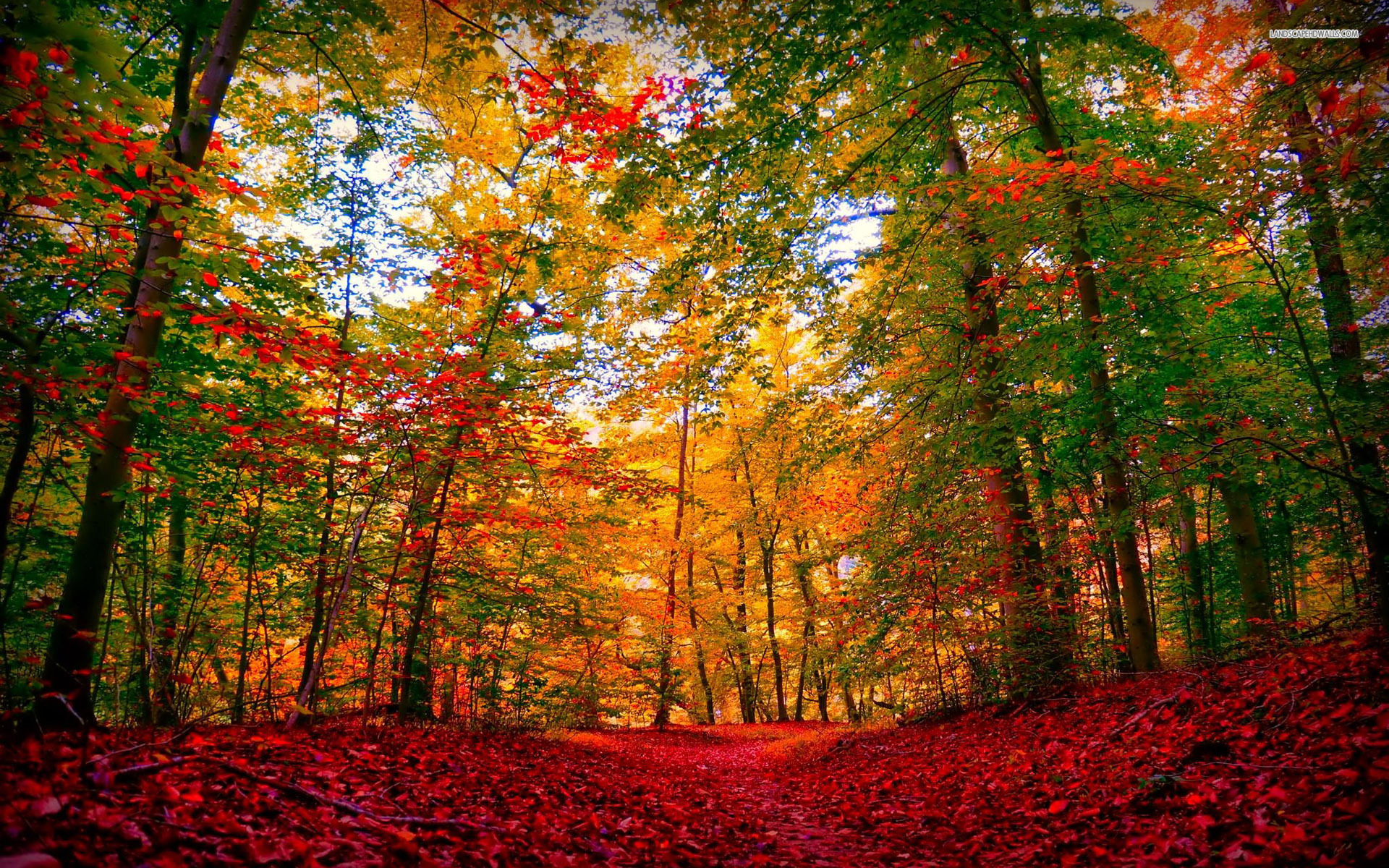 Autumn Leaves Falling Hd Wallpaper Extra Ordinary Autumn Forest Wallpapers Extra Ordinary