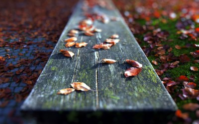 Fallen Leaves Close-up wallpapers | Fallen Leaves Close-up stock photos
