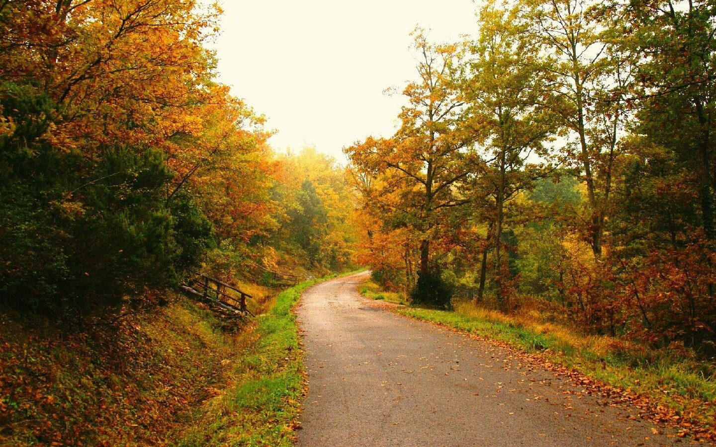 3d Falling Leaves Animated Wallpaper Footpath Through Autumn Forest Wallpapers Footpath