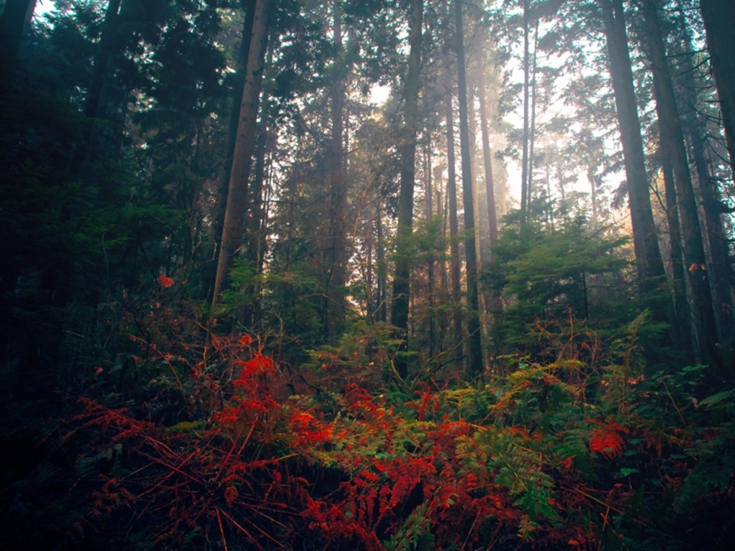 Lumia Wallpaper 3d Forest Trees Amp Red Flowers Wallpapers Forest Trees Amp Red