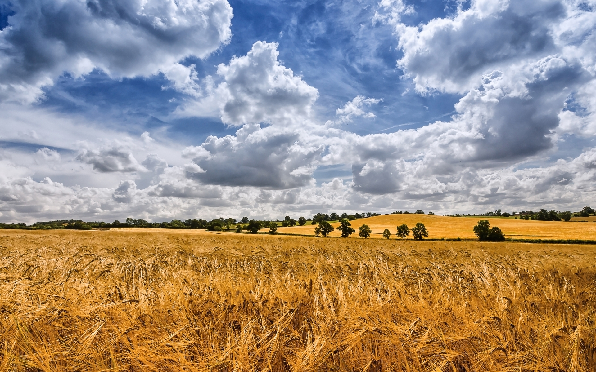 Pretty Fall Desktop Wallpaper Golden Wheat Field Cloudy Sky Wallpapers Golden Wheat