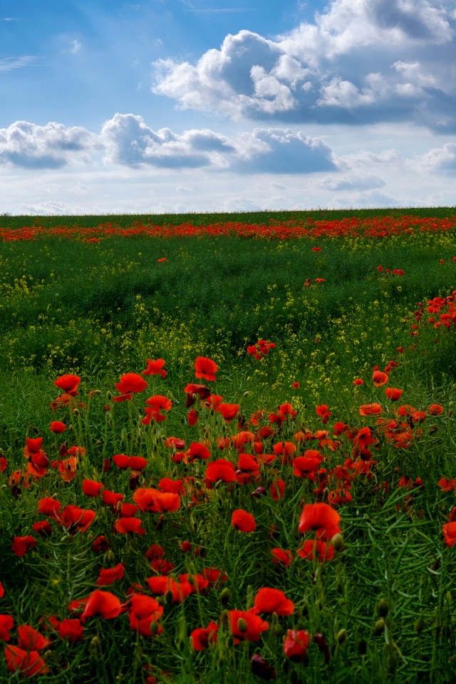 Poppy Wallpaper For Iphone 640x960 Great Poppy Field Amp Cloudy Sky Iphone 4 Wallpaper