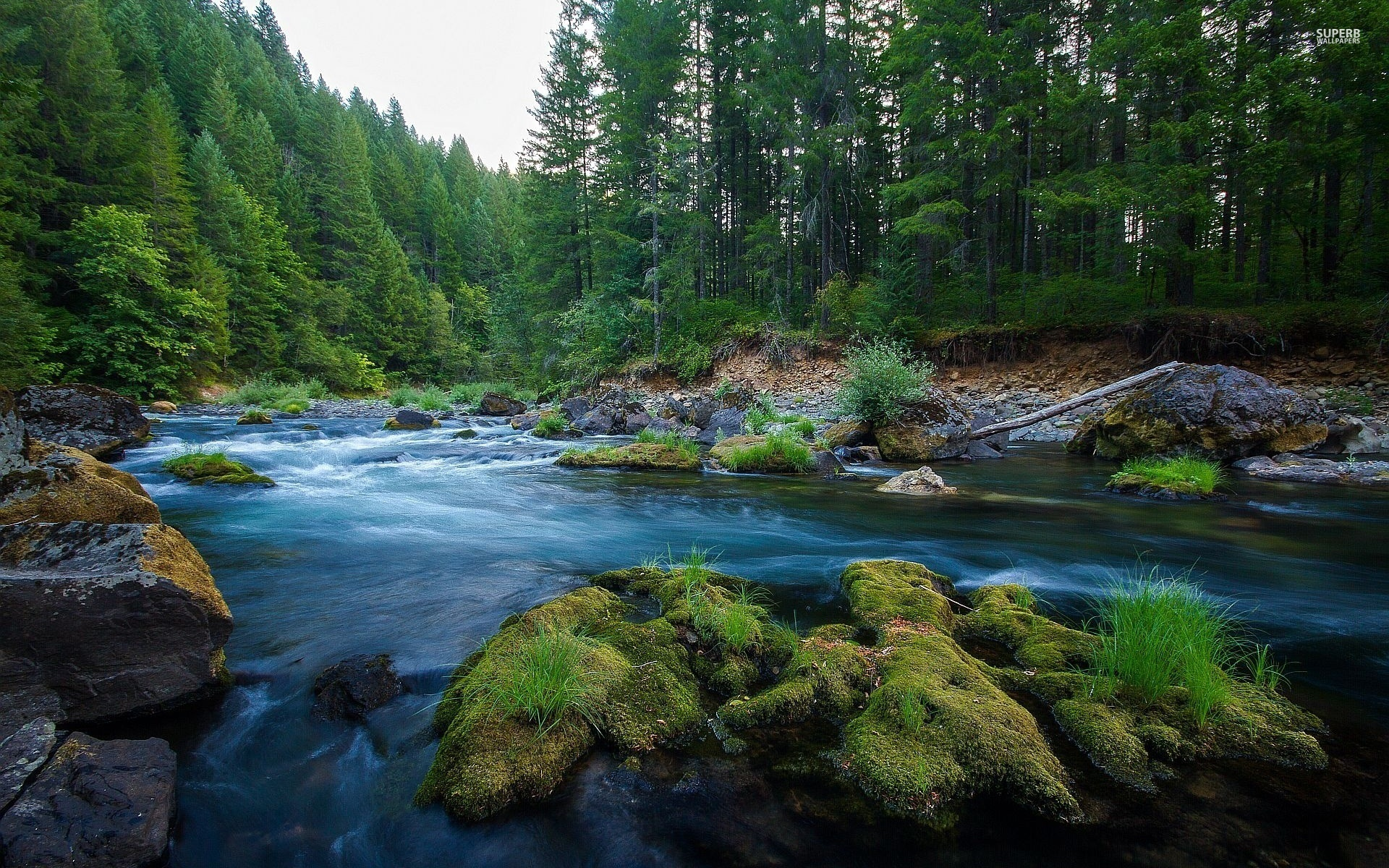 Animated Waterfall Wallpapers For Mobile Green Wood Pretty Stream Rocks Wallpapers Green Wood