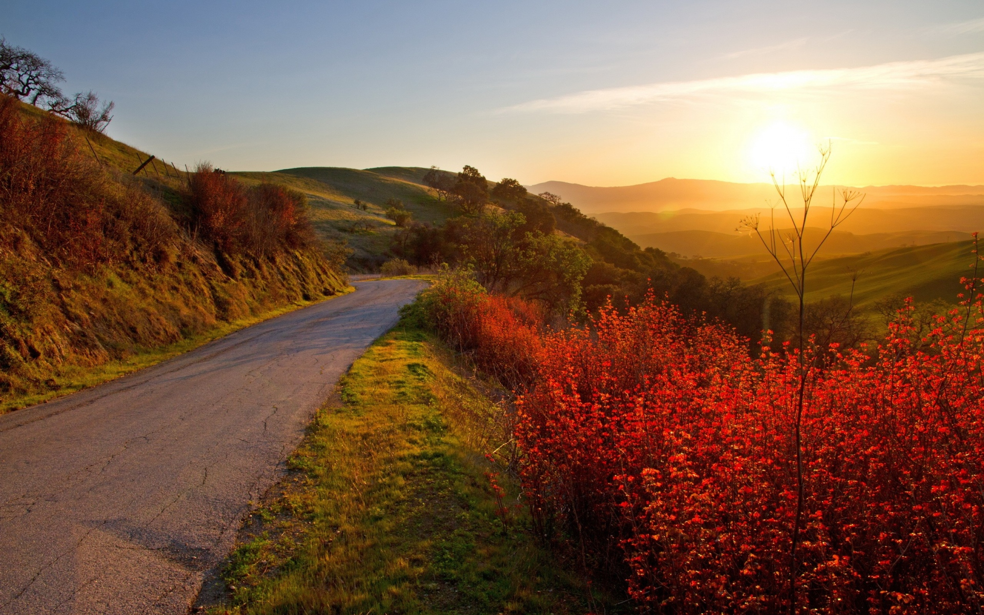 Forest Animated Wallpaper Hills Road Plants Amp Sunlight Wallpapers Hills Road
