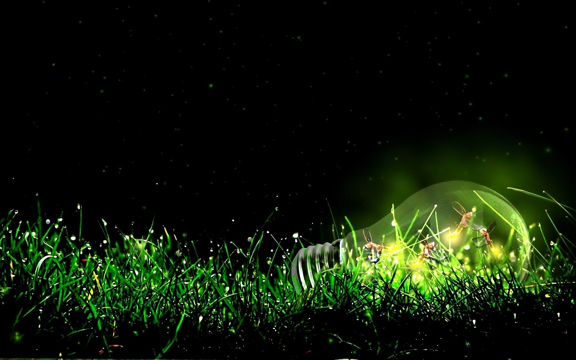 Hd Wallpapers Girls 1366x768 Insects Bulb Light Grass Wallpapers Insects Bulb Light