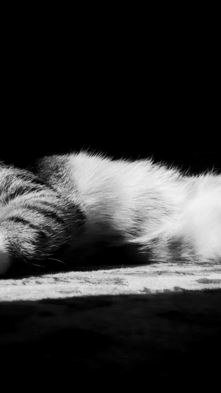 Black And White Home Wallpaper 720x1280 Lazy Kitten In Black And White Htc One X Wallpaper