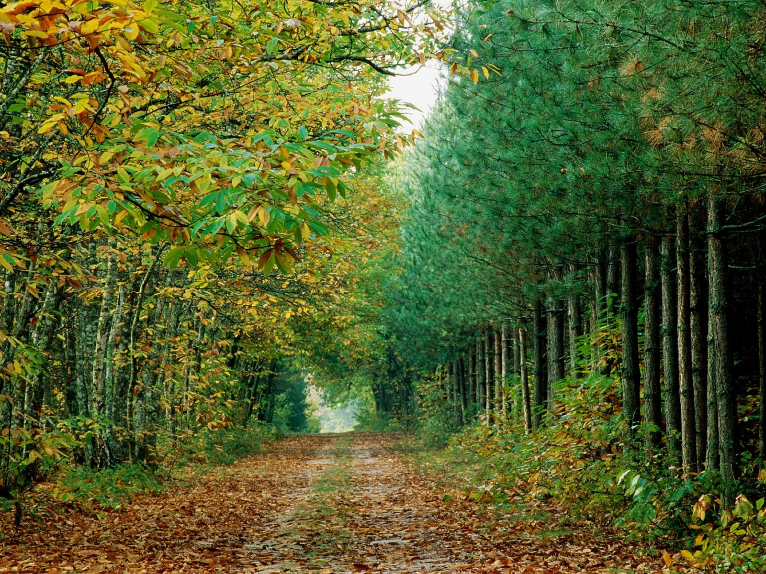 Desktop Wallpaper 3d French Country Lovely Autumn Forest Amp Way Wallpapers Lovely Autumn