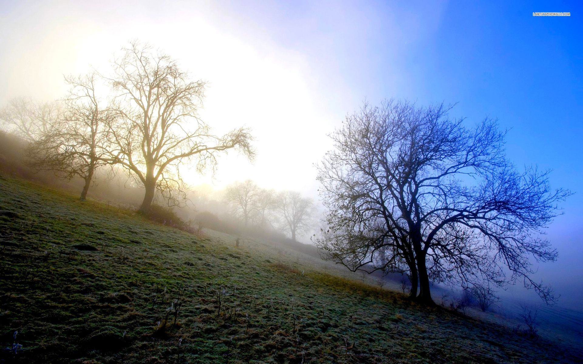 Animated Wallpaper For Tablet Misty Morning Hills Trees Wallpapers Misty Morning Hills