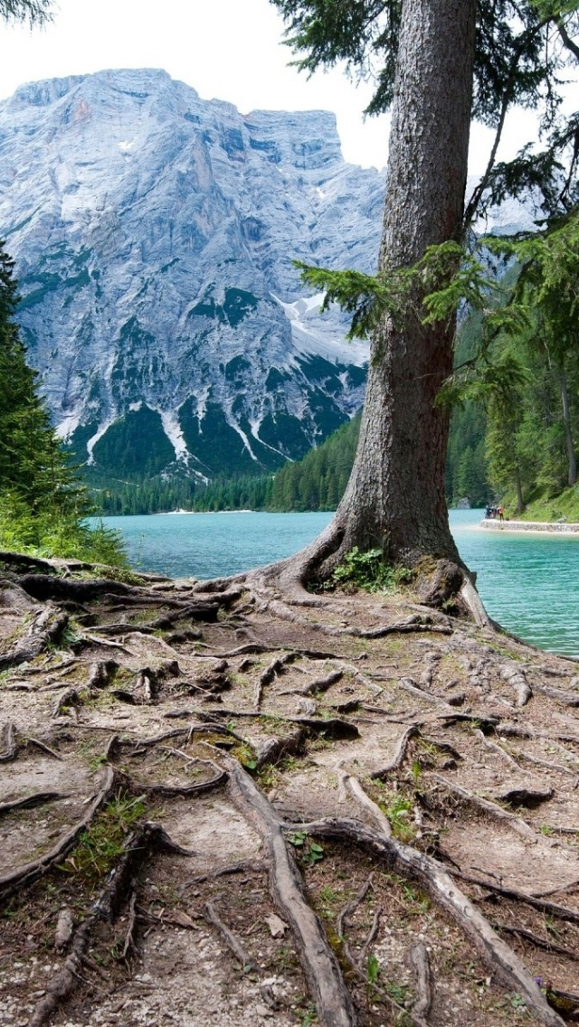 Mountain Iphone Wallpaper 640x1136 Mountain Lake Trees Amp Roots Iphone 5 Wallpaper