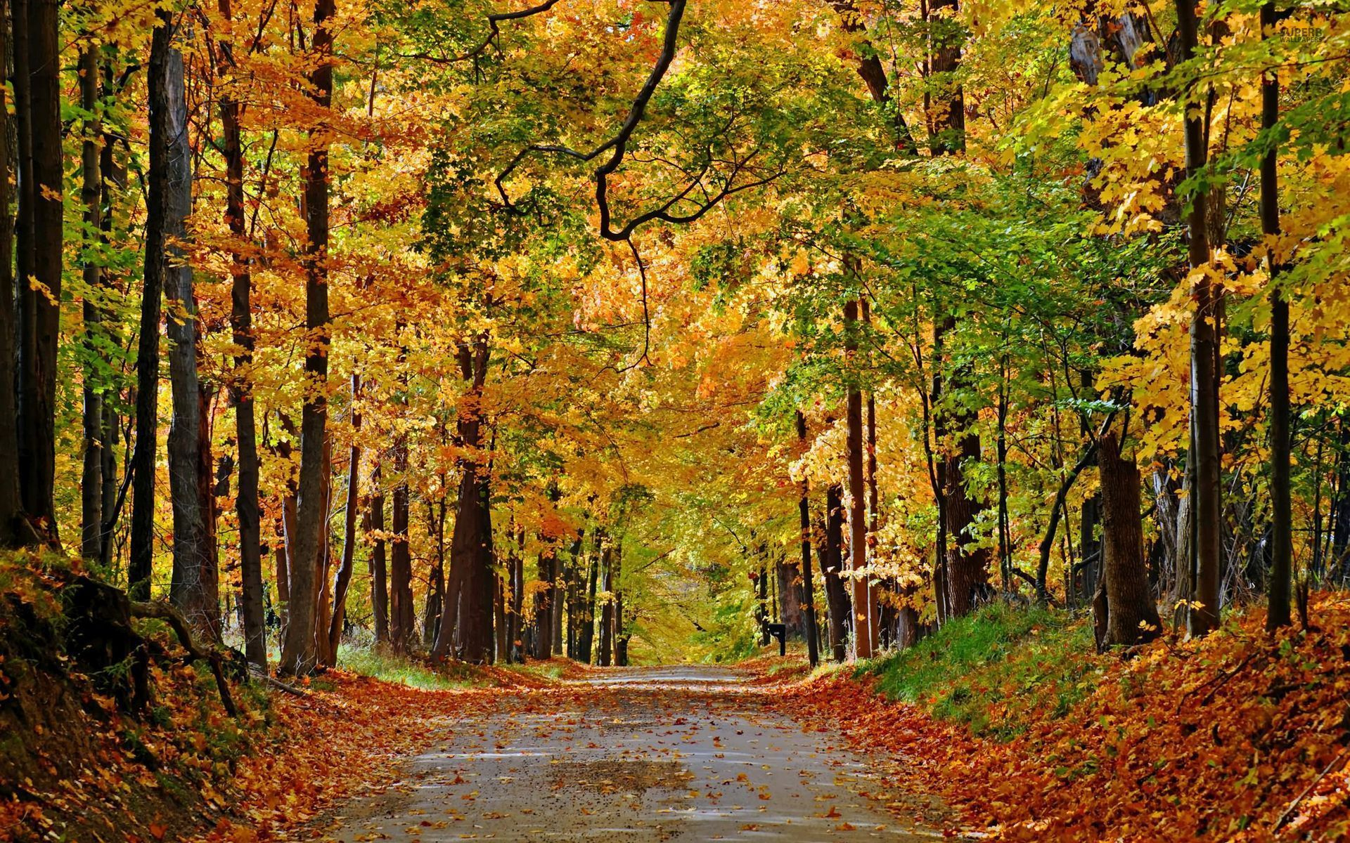 Falling Water Hd Wallpaper Nice Autumn Forest Path Leaves Wallpapers Nice Autumn