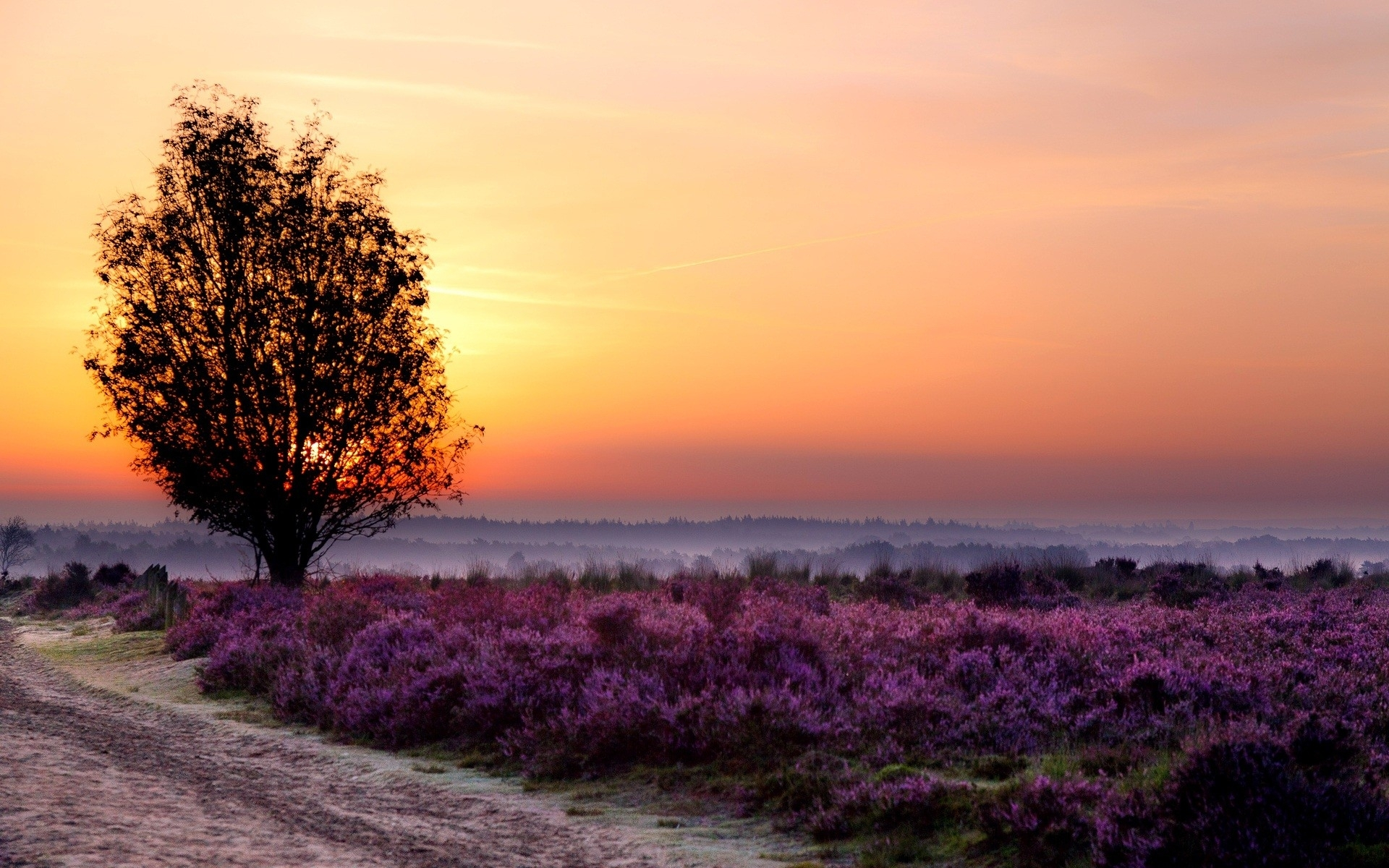 Beautiful Quotes Wallpaper For Facebook Purple Flower Field Tree Amp Way Wallpapers Purple Flower