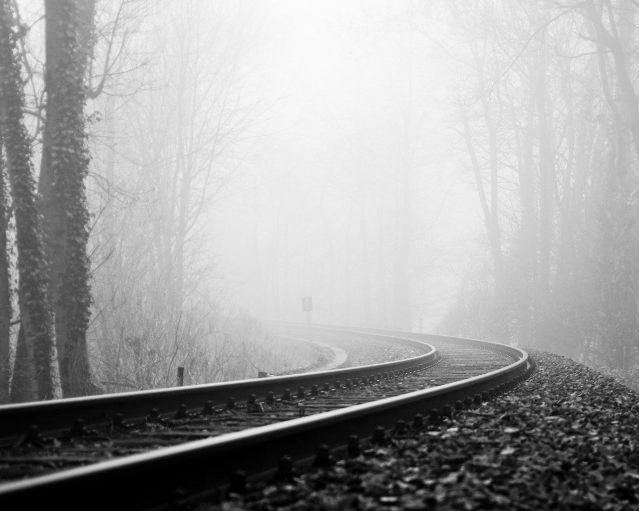 Sad Quotes Wallpapers For Desktop 1280x1024 Rail Road Fog Amp Dark Forest Desktop Pc And Mac