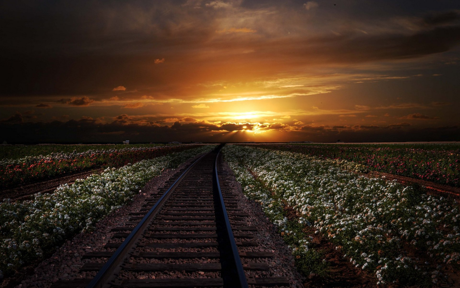 Top Hd 3d Wallpaper For Mobile Rail Road White Flowers Sunset Wallpapers Rail Road