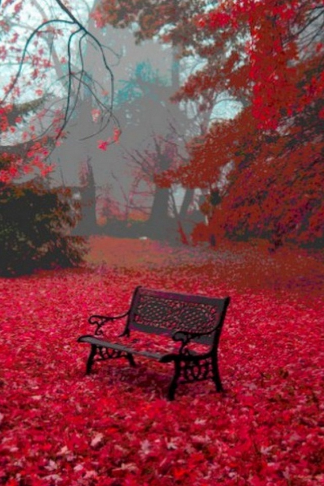 Fall Autumn Iphone Wallpaper 640x960 Red Autumn Carpet Bench Tree Iphone 4 Wallpaper