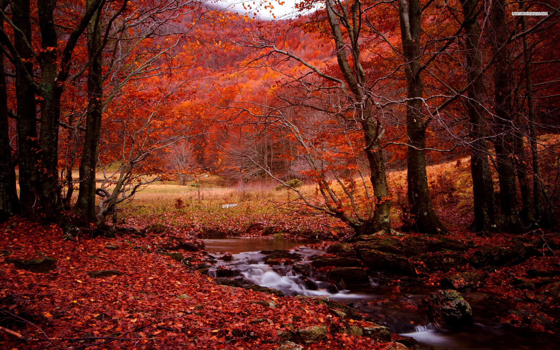 Fall Scenes For Ipad Wallpaper Red Forest Creek Leaves Stones Wallpapers Red Forest