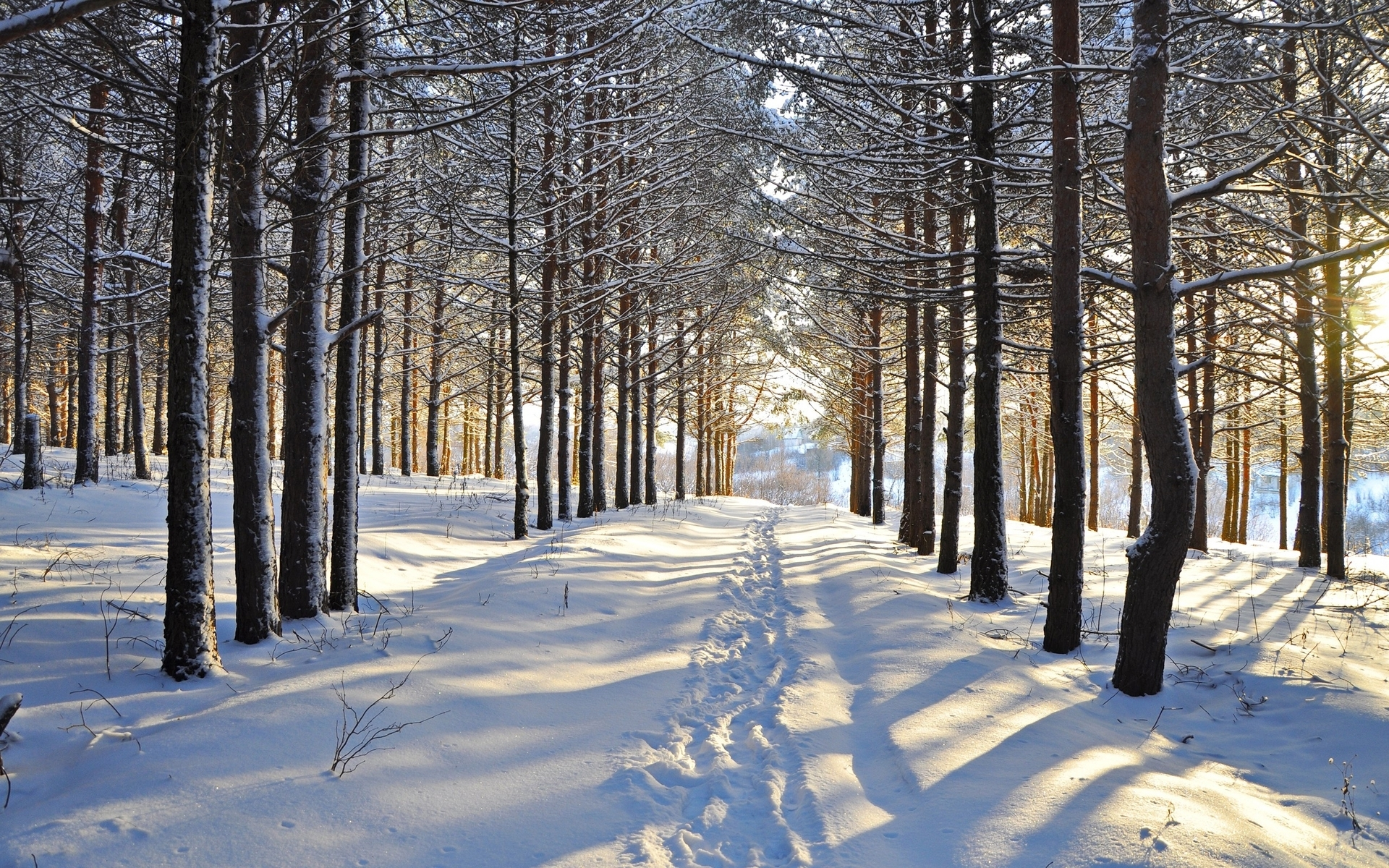 3d Purple Wallpaper For Tablet Snowy Forest Steps Vale Sunny Wallpapers Snowy Forest