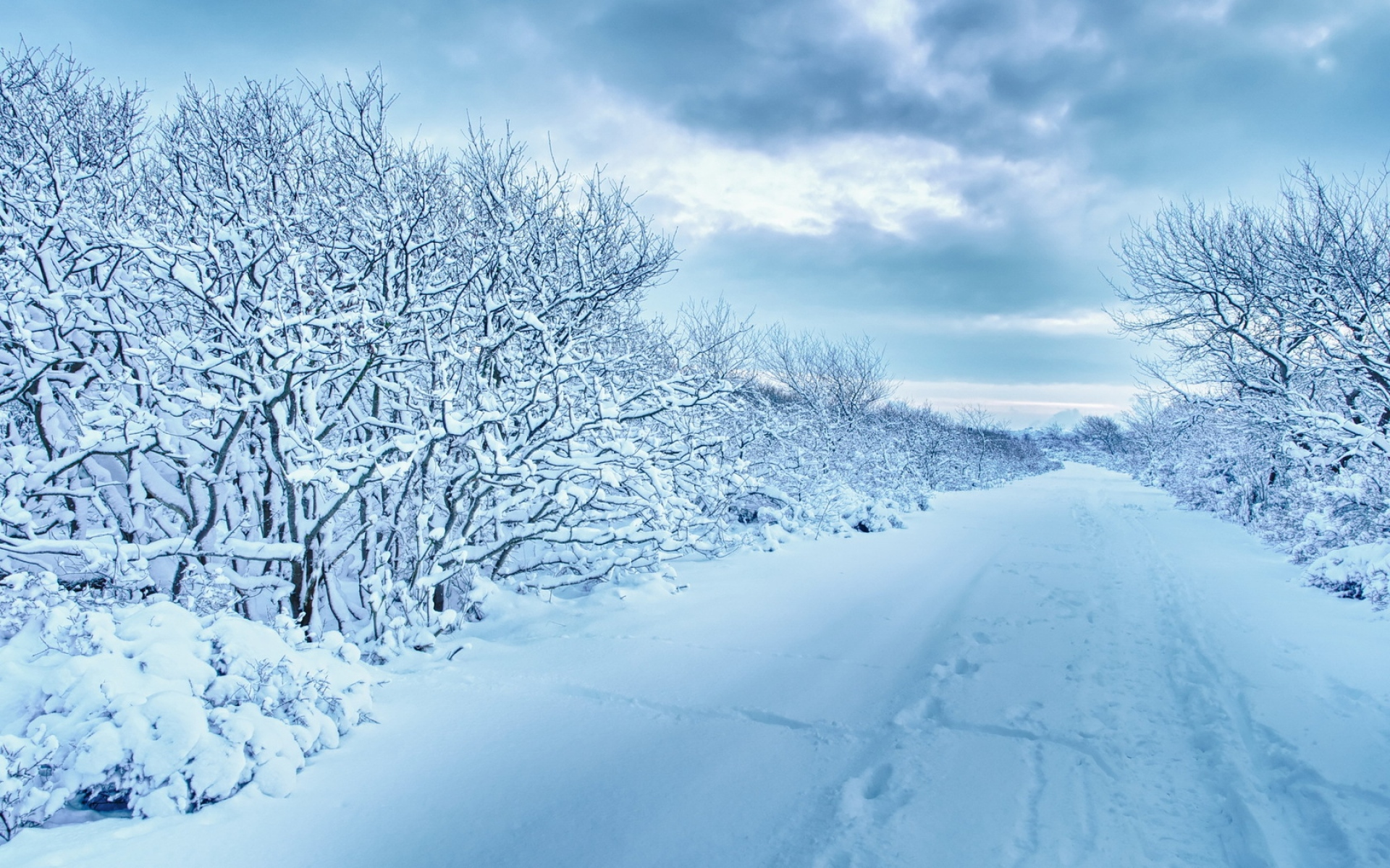 Snow Falling Wallpaper For Ipad Snowy Trees Amp Walk Way Wallpapers Snowy Trees Amp Walk Way