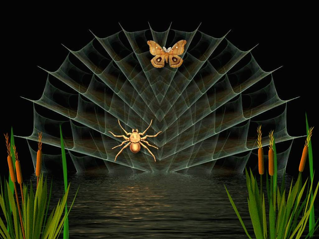 3d Frog Wallpaper Spider Amp Butterfly Wallpapers Spider Amp Butterfly Stock