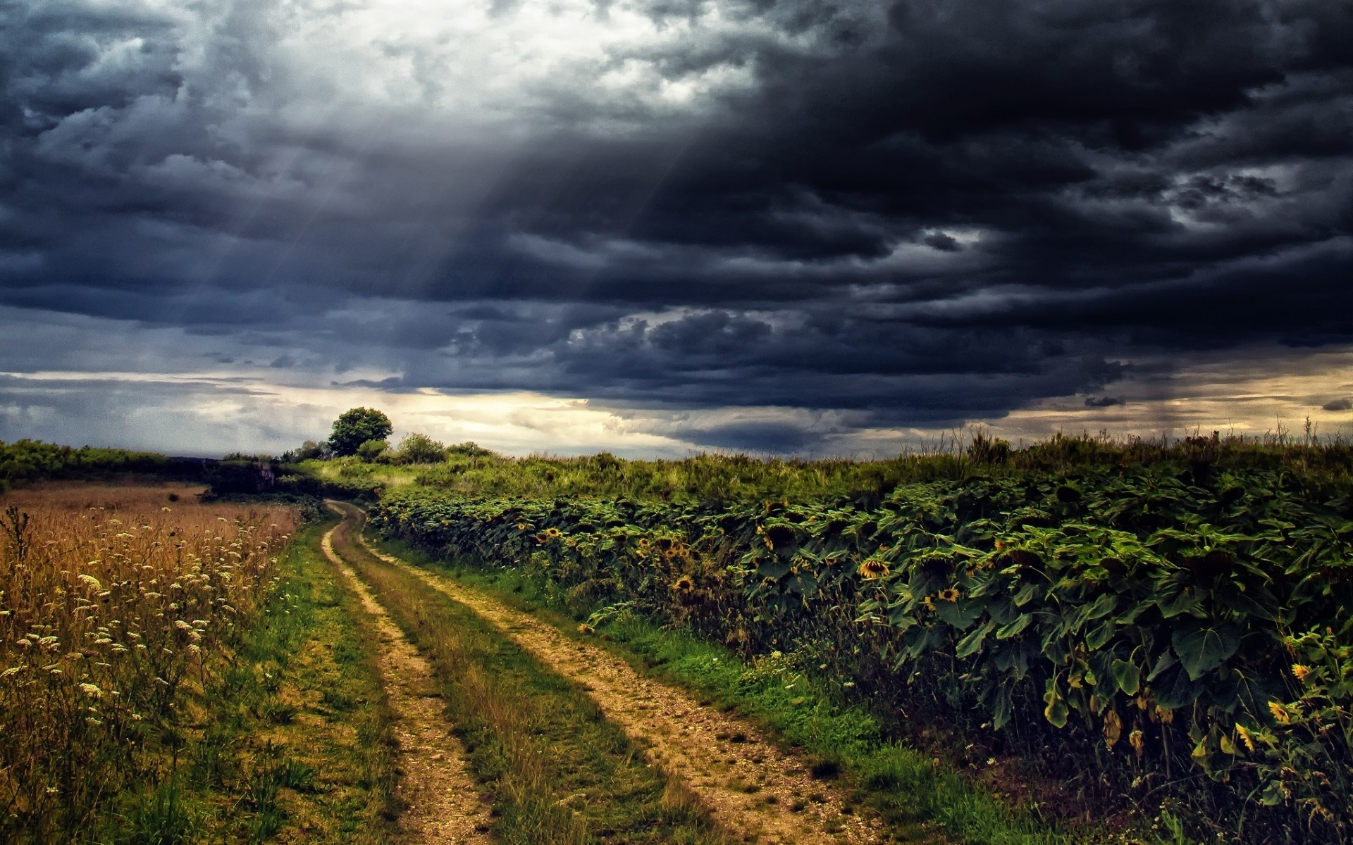 Animated Weather Wallpaper Iphone Sun Flowers Path Stormy Sky Wallpapers Sun Flowers Path