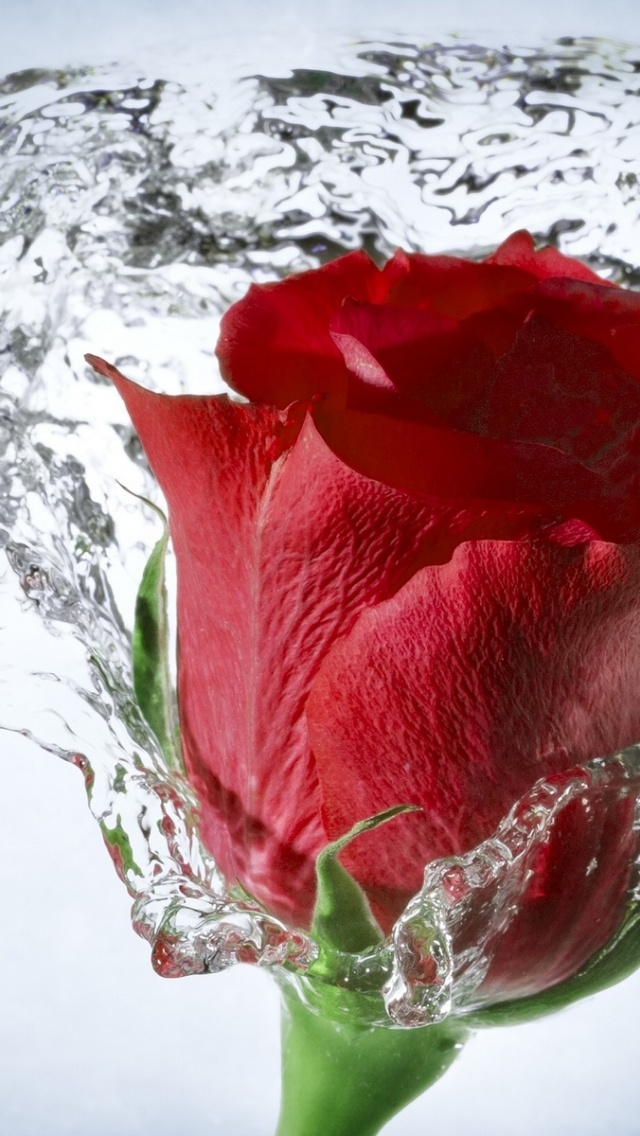 Wallpapers Hd Iphone 5 640x1136 Time Lapse Water Drops Rose Iphone 5 Wallpaper