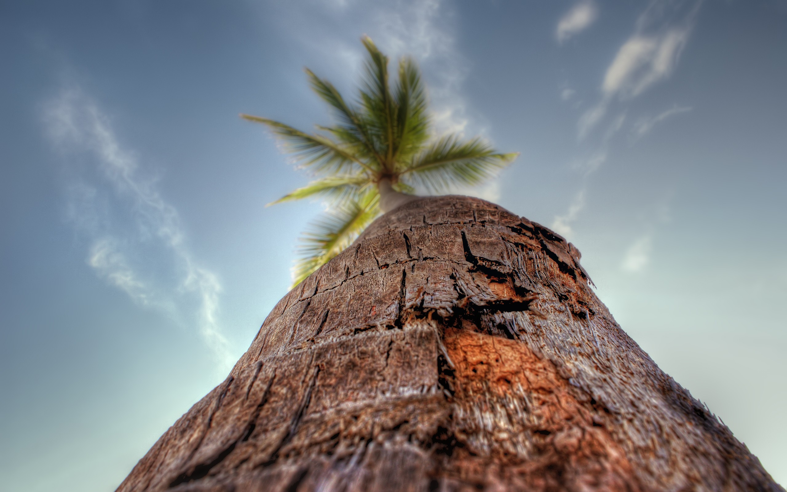 Exotic Cars Wallpaper 1920x1080 Tree Looking Up Wallpapers Tree Looking Up Stock Photos