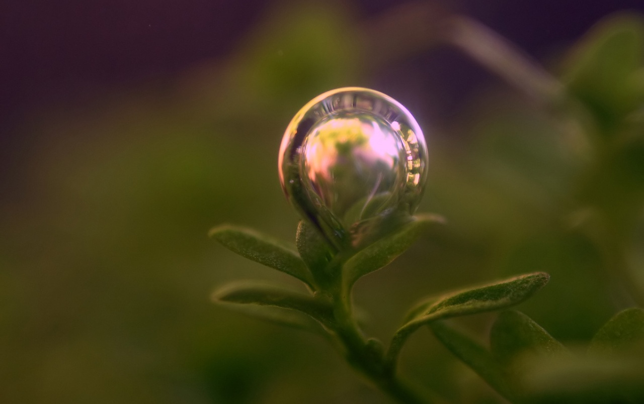 Animated Wallpaper For Tablet Bubble On Plant Wallpapers Bubble On Plant Stock Photos