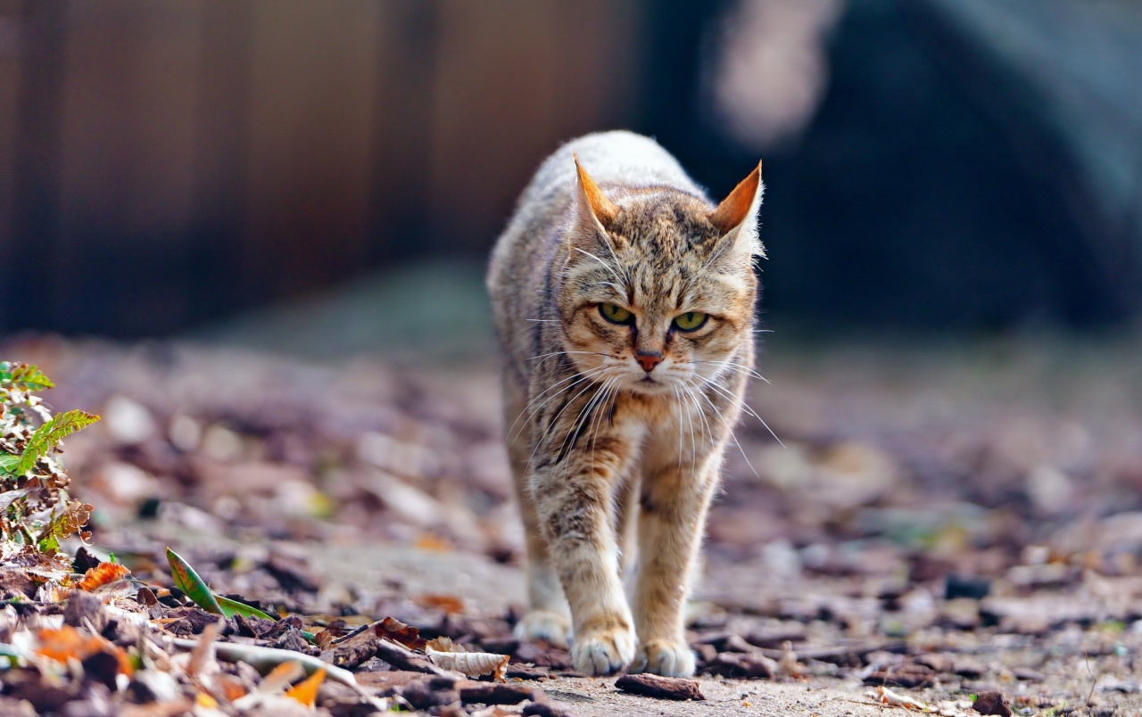 Where The Wild Things Are Wallpaper Hd Cat Walking Wallpapers Cat Walking Stock Photos