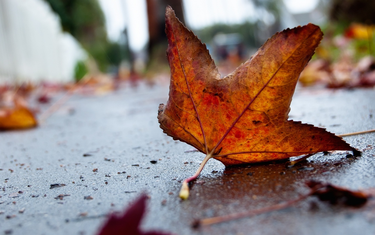 Fall Nature Scenes Wallpaper Autumn Leaf Macro Wallpapers Autumn Leaf Macro Stock Photos