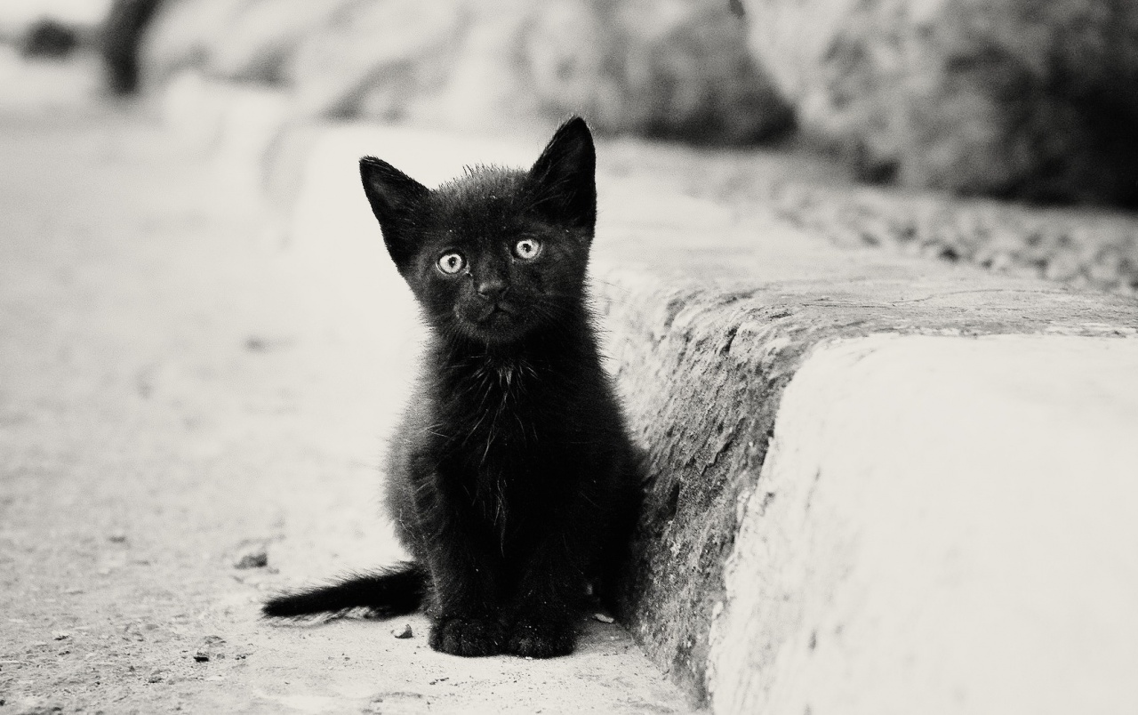Cute Wallpapers For Facebook Cover Photo Lonely Black Kitten Wallpapers Lonely Black Kitten Stock