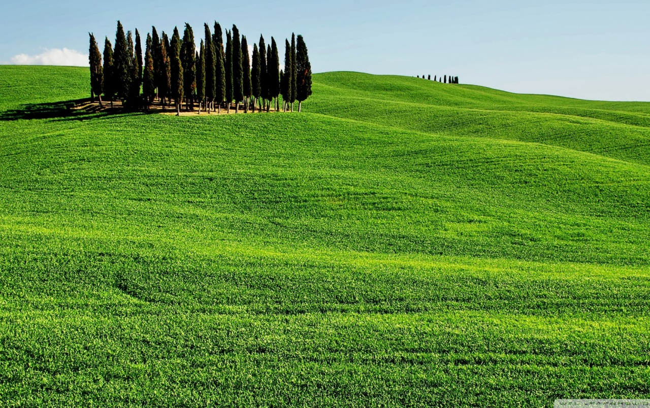Candle Wallpaper Hd Cypress On Hill Wallpapers Cypress On Hill Stock Photos