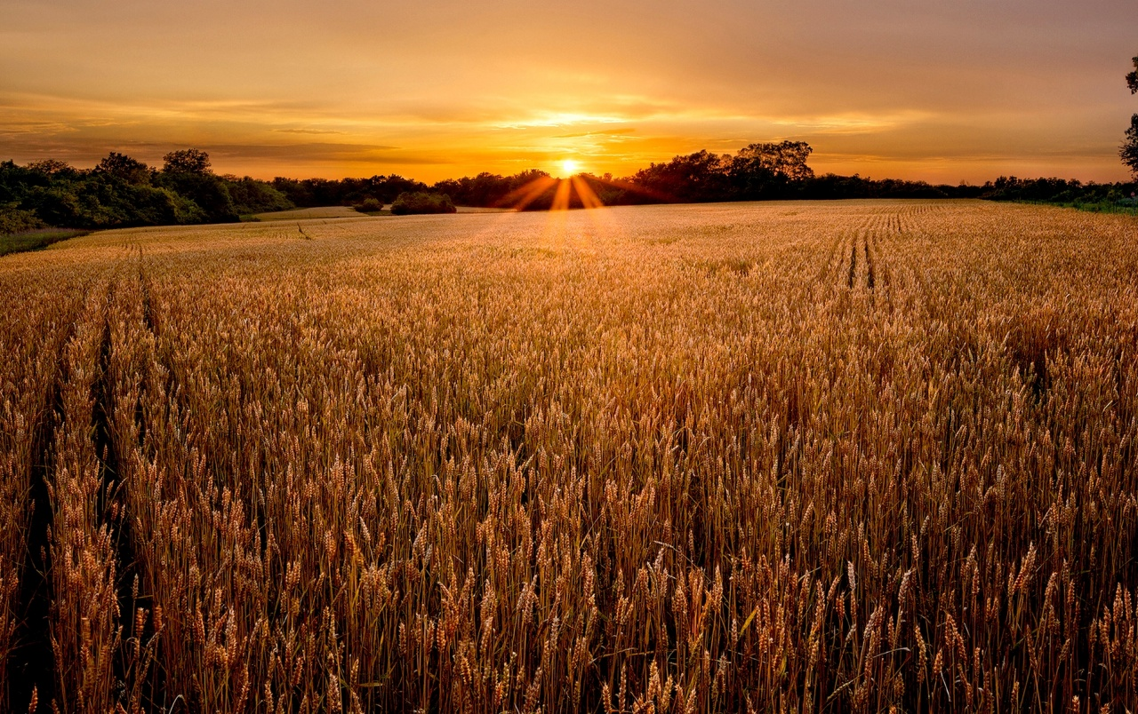 Best 3d Wallpapers For Iphone Lovely Sunset Field Wallpapers Lovely Sunset Field Stock