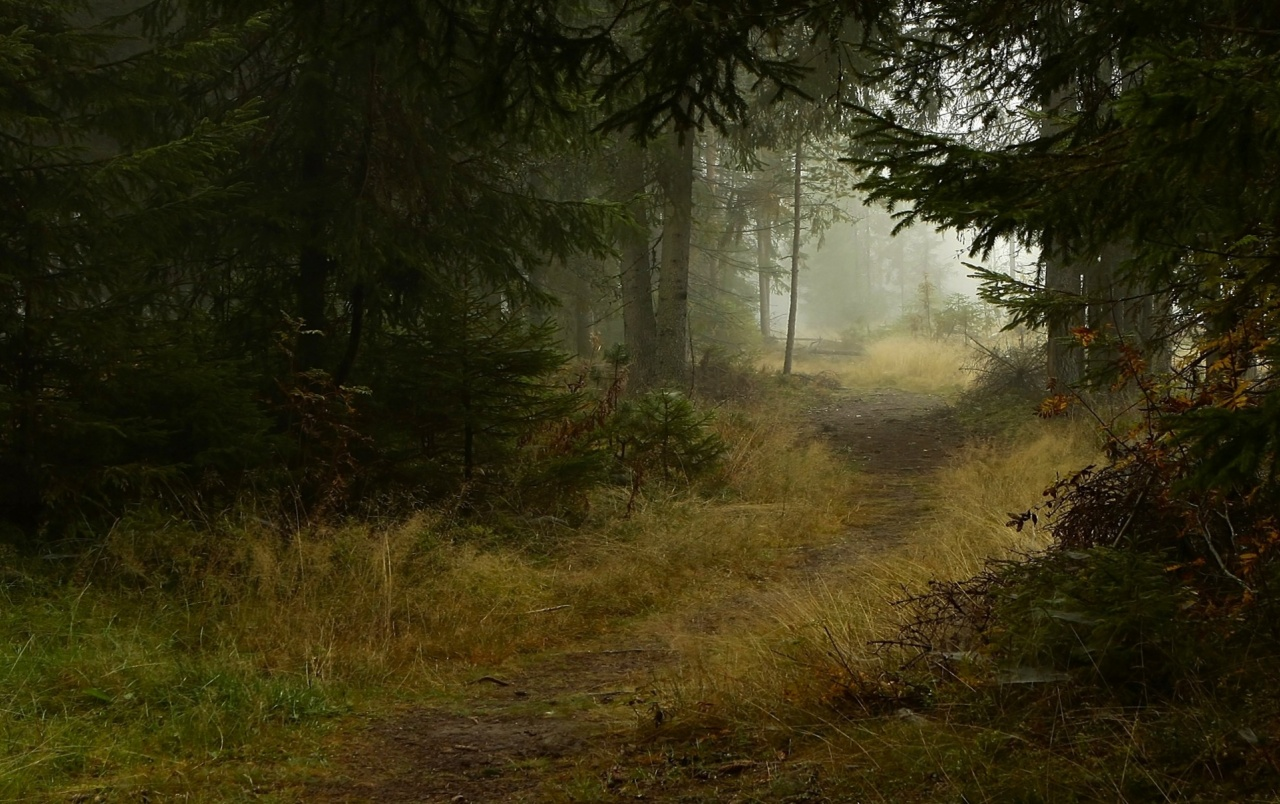 Lumia Wallpaper 3d Deep Forest Path Wallpapers Deep Forest Path Stock Photos