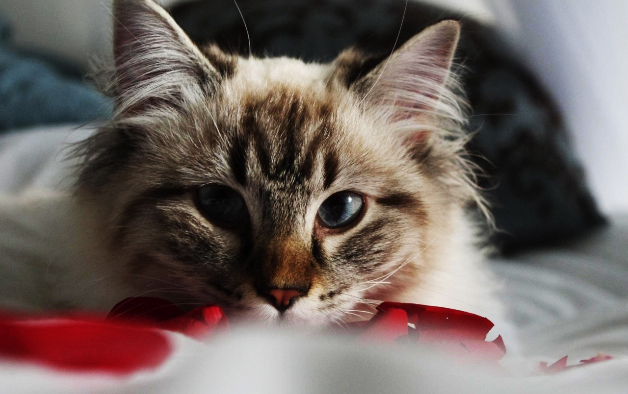 Cute Kitty Cat Wallpapers Cat Head Wallpapers Cat Head Stock Photos