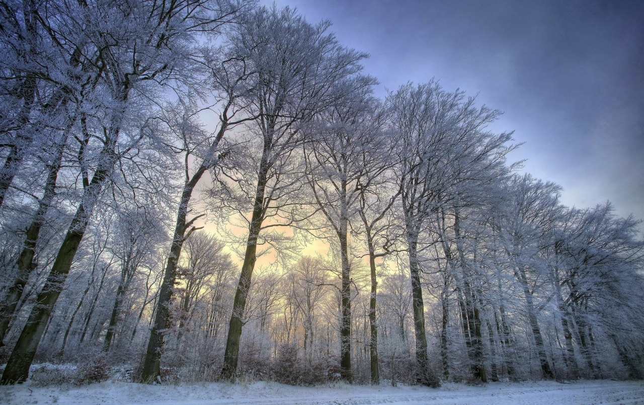 Htc One 3d Wallpaper Awesome Snow Trees Wallpapers Awesome Snow Trees Stock