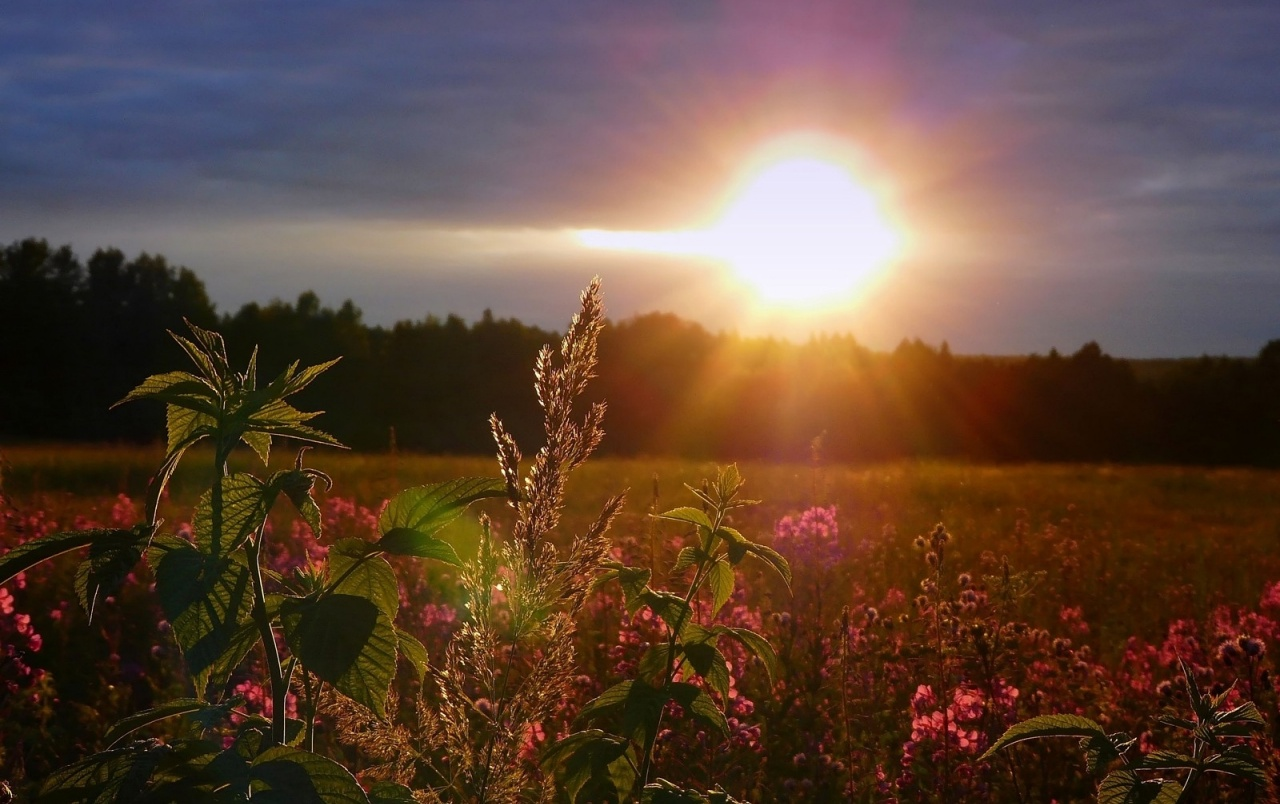 Top Hd 3d Wallpaper For Mobile Bright Sun Forest Flower Field Wallpapers Bright Sun