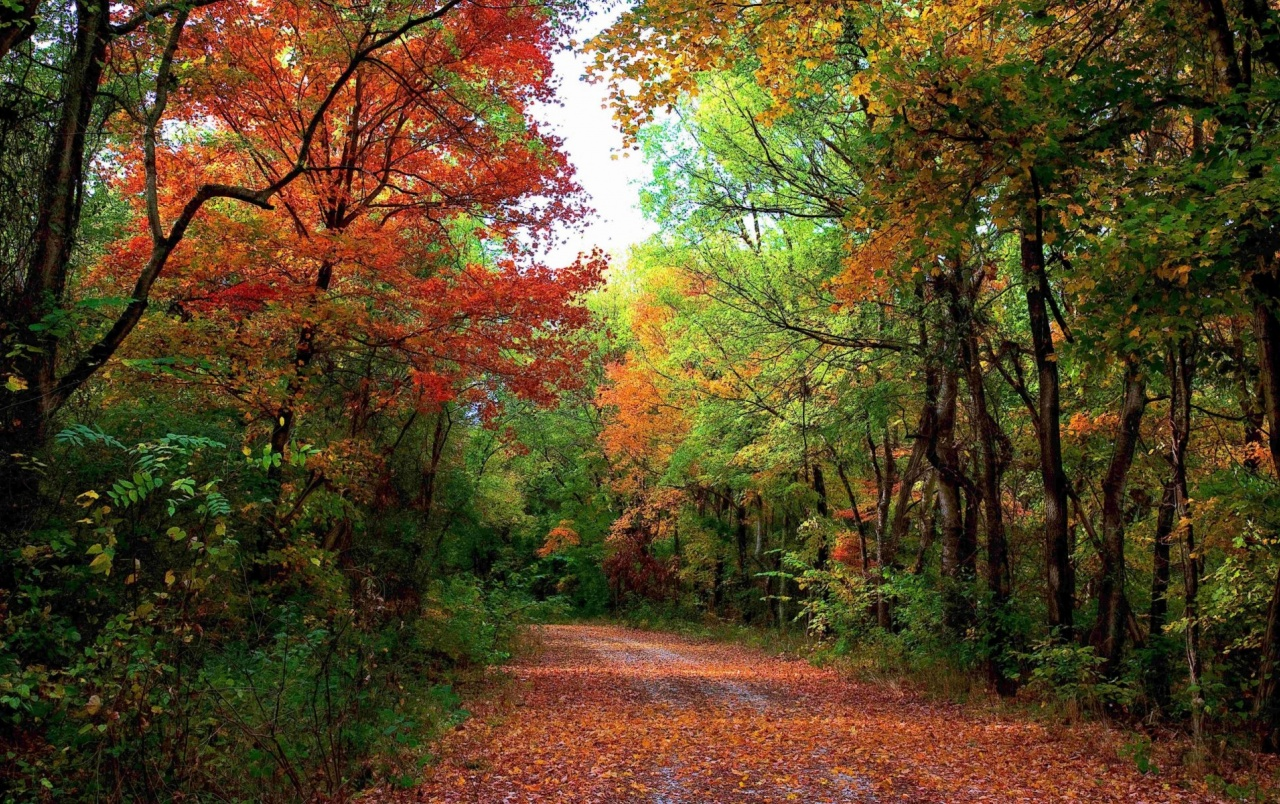 3d Wallpaper For Nexus 5 Autumn Forest Path Amp Leaves Wallpapers Autumn Forest