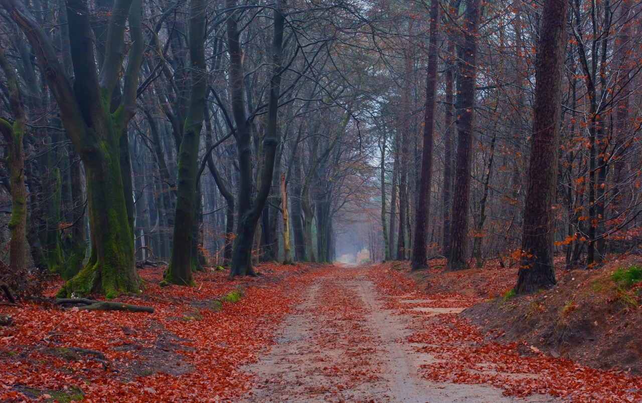 Free Fall Wallpaper For Iphone Forest Red Leaves Amp Path Wallpapers Forest Red Leaves